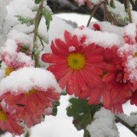 Снег... снег... :: Вячеслав Медведев