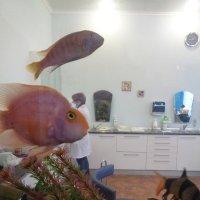 Реально-виртуальная реальность:золотые рыбки приплыли в кабинет зубного врача :: Алекс Аро Аро