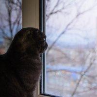 Взгляд в окно :: Елена Зудова