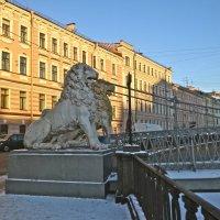 Гривастые львы. :: Елена
