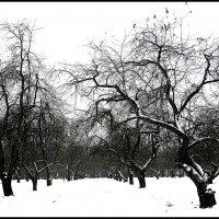 Причудливость зимнего сада :: Михаил Малец