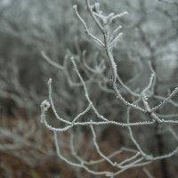 Холодные щупальца зимы :: Евгений Khripp