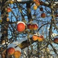 зимние яблочки :: Светлана