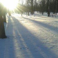 Солнечный день :: Сапсан