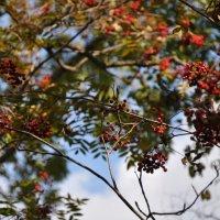 Ботанический сад. Октябрь. :: Елена Тимонова