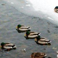 замерзшая полынья :: elena manas
