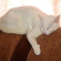 Бело-Розовая Кошка спит... :: Дмитрий Петренко