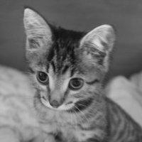Любимый кот :: Денис Бородин