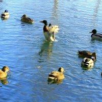 Покормите птиц зимой. :: Валентина ツ ღ✿ღ