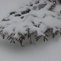 Зима прийшла :: Юля