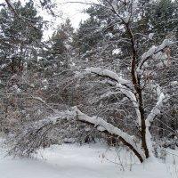 Зима пришла настоящая ! :: Мила Бовкун