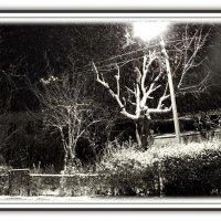 Всю ночь торжественно и чинно...шел снег... :: Людмила Богданова (Скачко)