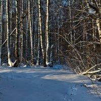 Вечер в лесу :: Александр Березуцкий (nevant60)