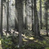 Утро в лесу..... :: Юрий Цыплятников