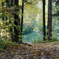 Осенний парк :: Алексей Цветков