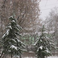 Ёлочки в снегу :: Дмитрий Никитин