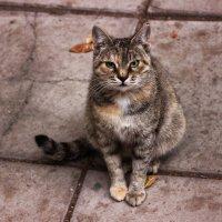 Кошка, которая гуляет сама по себе :: TATYANA PODYMA