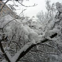 Нежный снежок :: Вера Щукина