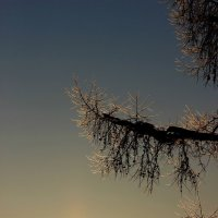 Зимний закат. :: Андрей Скорняков