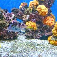 Коралловый риф :: Владимир Гилясев