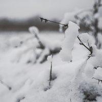 Зима :: Ксения Заводчикова
