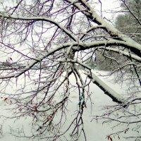 Озеро.Зима. :: Сергей F