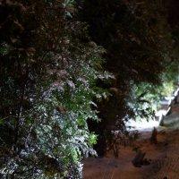 Таинственный свет :: Софи Sintetsu Сургучева