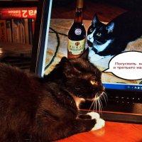 А говорят коты не пьют... :: Александр Резуненко
