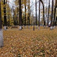 Осенний парк в Калуге. :: Валюша Черкасова