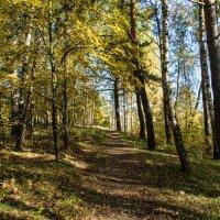 Осенний лес :: Владимир Безбородов