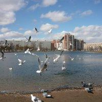 Чайки в городе :: Вера Щукина