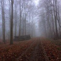 Лесной туман..... :: Alexander
