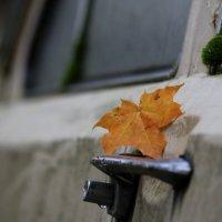 Осенняя парковка... :: юрий
