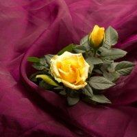 Желтые розы и марсала :: Александра
