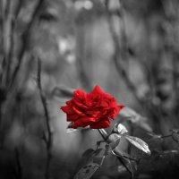 Красное и черное :: Андрей Степанов