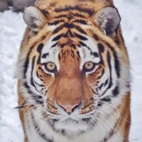 0373 :: Аркадий Лаптенко