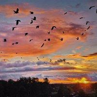 Птицы на закате :: Валерий Талашов
