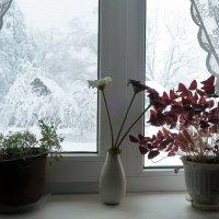 зимнее утро :: Нина Сигаева