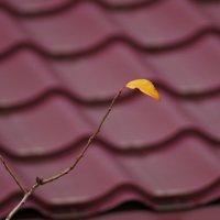 Последний лист качаясь на ветру..... :: владимир