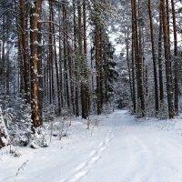 В начале зимы :: Милешкин Владимир Алексеевич