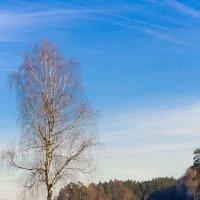 Первые зимние дни... :: Waldemar .