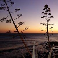 закат на Атлантическом побережье Португалии :: Svetlana (Lucia) ***
