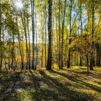 Русский лес :: Владимир Безбородов