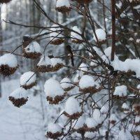 Начало декабря. Под снежною шапкой... :: Елена Павлова (Смолова)