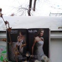 Снежные одуванчики... :: Алекс Аро Аро