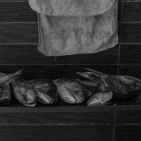 мрачный натюрморт с рыбьими головами :: Sofia Rakitskaia