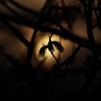 Ночь весной :: Краснов  Ю Ф
