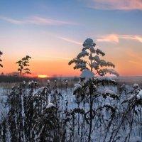 Зимний закат :: Лара Симонова