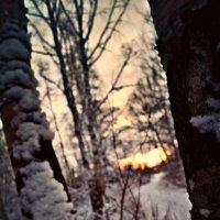среди деревьев :: Валерия Воронова