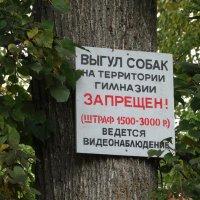 Санкции против собак :: Валерий Чепкасов